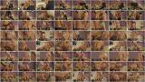 Лиха беда начало / Lara ( Getting Laid / 17.10.14) [2014 г., All sex, 720p]