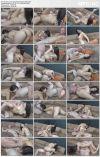 Сексуальные сеньориты 9 / Sexy Senoritas 9 (2013) WEB-DL 720p | 5.13 GB