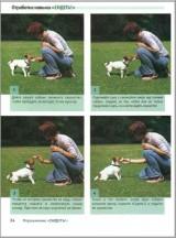 Школа для собак. Шаг за шагом