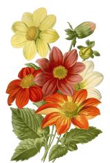 Creative Market - Sunflower Dream Graphics