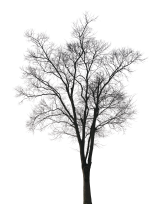 PHOTOBASH - DEAD TREES (PNG)